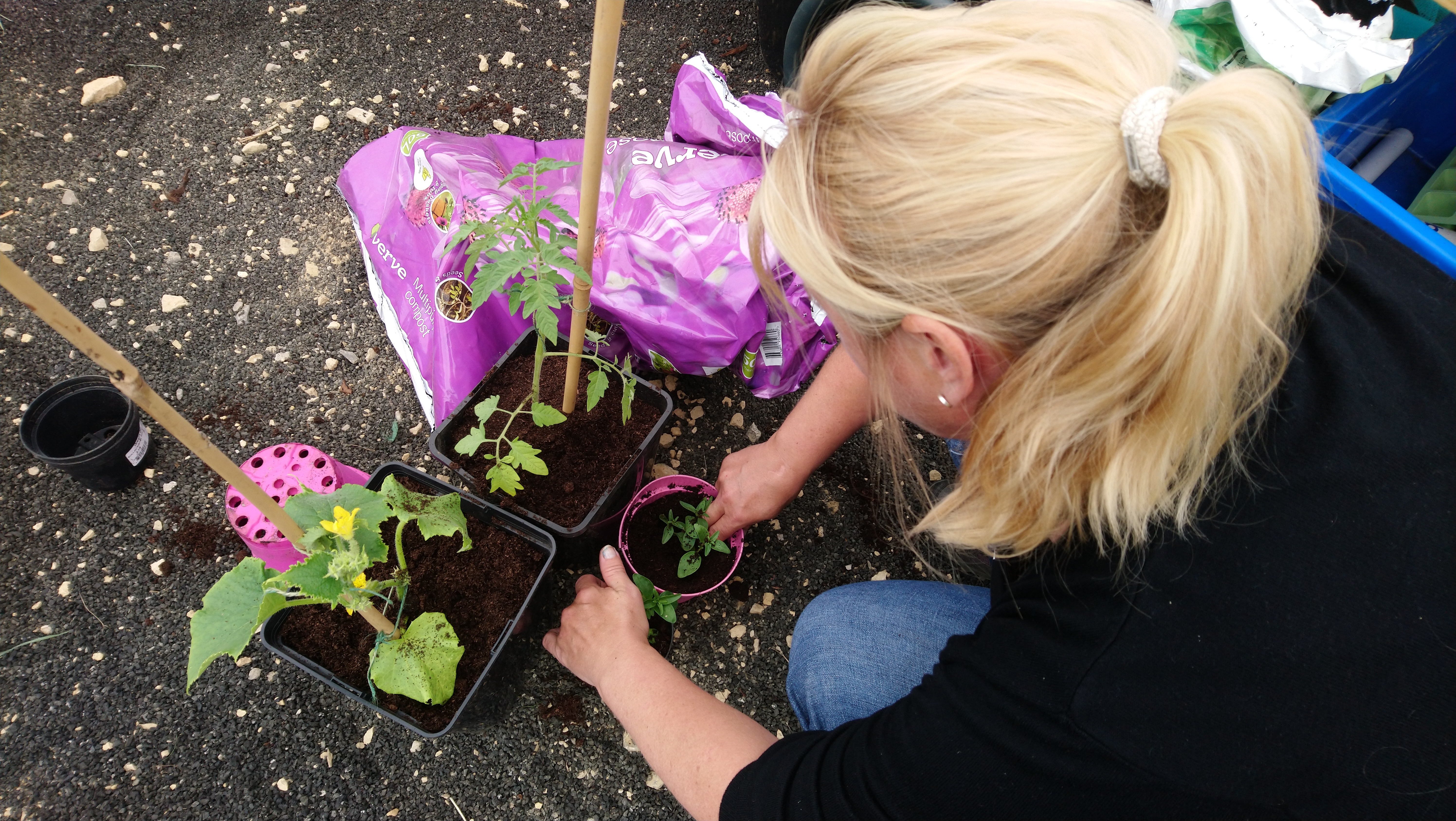 Planting for the Future Project